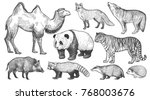 Stock vector realistic animals set camel panda fox wolf tiger boar red panda hedgehog and badger 768003676