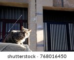 cat on the car in the morning | Shutterstock . vector #768016450