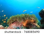 underwater coral reef and fish | Shutterstock . vector #768085690