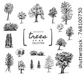 big hand drawn trees collection.... | Shutterstock .eps vector #768100750