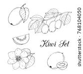 hand drawn black and white kiwi ...   Shutterstock .eps vector #768104050