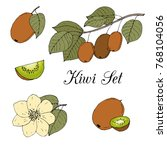 hand drawn colored kiwi fruits  ...   Shutterstock .eps vector #768104056
