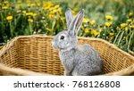 Rabbits Bunny In The Garden