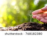 seedlings are growing from... | Shutterstock . vector #768182380