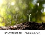 seedlings are growing from... | Shutterstock . vector #768182734