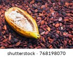 indonesian cocoa trees... | Shutterstock . vector #768198070