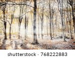 English Woodland With Thick...