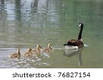 Canada Geese Are Among The Mos...