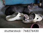 Little Kitten In An Old Shoe
