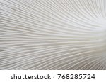 Abstract Nature Background...