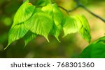 nature background with birch... | Shutterstock . vector #768301360