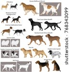 collection of different breeds... | Shutterstock .eps vector #768343099