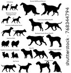 Stock vector collection of silhouettes of different breeds of dogs 768344794