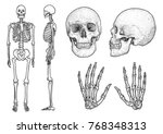Human Skeleton Collection...