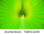 green palm leaf close up | Shutterstock . vector #768411640