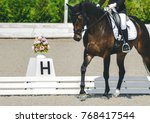 dressage horse and rider.
