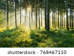 spruce tree forest  sunbeams... | Shutterstock . vector #768467110