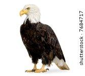 bald eagle  22 years   ... | Shutterstock . vector #7684717