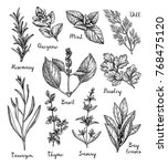 herbs set. collection of ink... | Shutterstock .eps vector #768475120