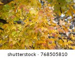 colorful autumn leaves with... | Shutterstock . vector #768505810