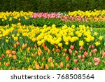 tulips and bluebell flowerbed | Shutterstock . vector #768508564