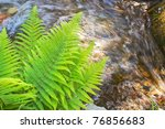 Fern overlooking mountain brook - stock photo