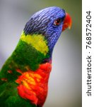 colourful parrot seen in bird... | Shutterstock . vector #768572404