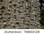 floss silk tree  or called ... | Shutterstock . vector #768602128