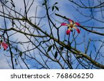 the blooming flower of the... | Shutterstock . vector #768606250