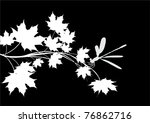 Illustration With White Maple...