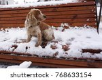 One Dog Sits On A Snow Covered...