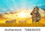 zebras on the african savannah... | Shutterstock . vector #768646333