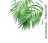 watercolor palm leaves on white ... | Shutterstock . vector #768664783