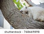 homeless feral cat roll up on...   Shutterstock . vector #768669898