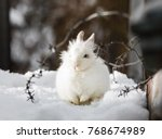 Stock photo white rabbit wire winter snow 768674989