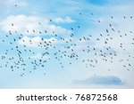 Many Birds Flying In The Sky
