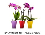 three orchids in pots isolated...   Shutterstock . vector #768737008