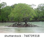 Pair Of Mangrove At Back Side...