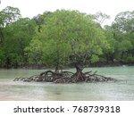 Pair Of Mangrove At Back Side...