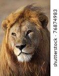 Lion cub portrait, Serengeti National Park, Tanzania, East Africa - stock photo