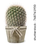 Cactus Plant In Vase Isolated...