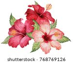 watercolor composition of... | Shutterstock . vector #768769126