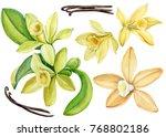 Set Vanilla Flower  Watercolor...