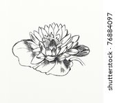 a water lily drawing by hand | Shutterstock . vector #76884097