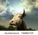 brown holstein cow in the field ... | Shutterstock . vector #76886725