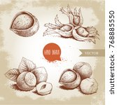 hazelnuts set. whole  peeled ... | Shutterstock .eps vector #768885550