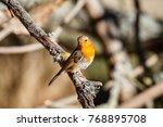 european robin  common.... | Shutterstock . vector #768895708
