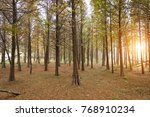 beautiful forest in china | Shutterstock . vector #768910234