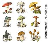 mushroom set hand drawn... | Shutterstock .eps vector #768936748