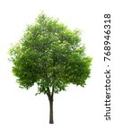 green tree on a white background | Shutterstock . vector #768946318